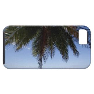 Palm tree along Caribbean Sea. iPhone 5 Cases