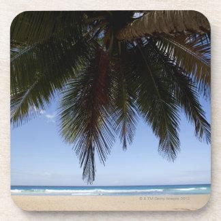 Palm tree along Caribbean Sea. Drink Coasters