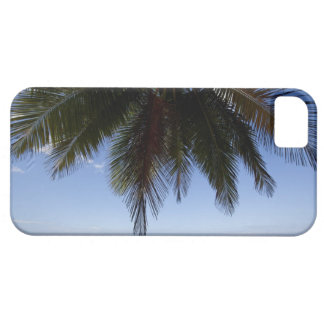 Palm tree along Caribbean Sea. iPhone 5 Covers