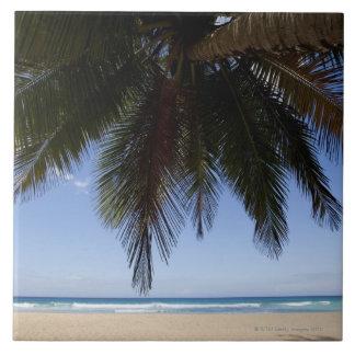 Palm tree along Caribbean Sea. Large Square Tile