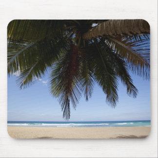 Palm tree along Caribbean Sea. Mouse Mat