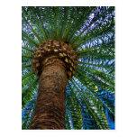 Palm Tree And Beach Wedding Invitation Postcard