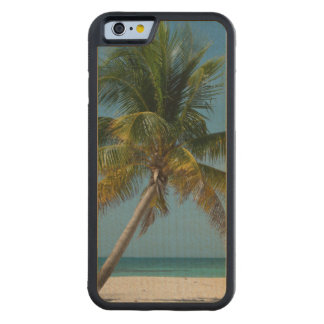 Palm tree and white sand beach  2 maple iPhone 6 bumper