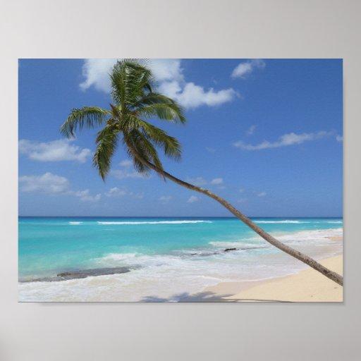 Palm tree beach Caribbean Barbados Poster