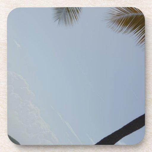 Palm tree beach coasters