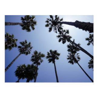Palm Tree California Santa Barbara Postcard