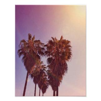 Palm Tree Heart Photo
