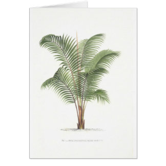 Palm tree illustration collection card