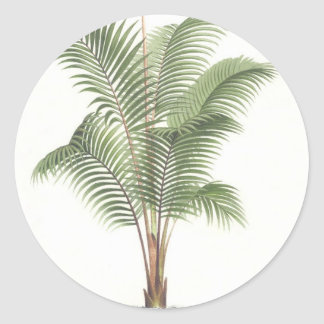 Palm tree illustration collection classic round sticker
