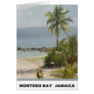 Palm Tree, Montego Bay Jamaica June 2011 Card