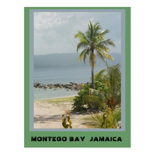 Palm Tree, Montego Bay Jamaica June 2011 Postcard