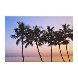 Palm tree, morning canvas print