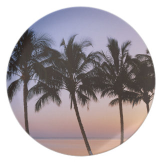 Palm tree, morning plate