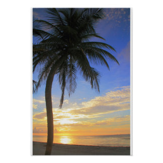 Palm tree on the beach at sunrise poster