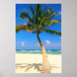 Palm Tree on the Beach, Playa Del Carmen, Poster