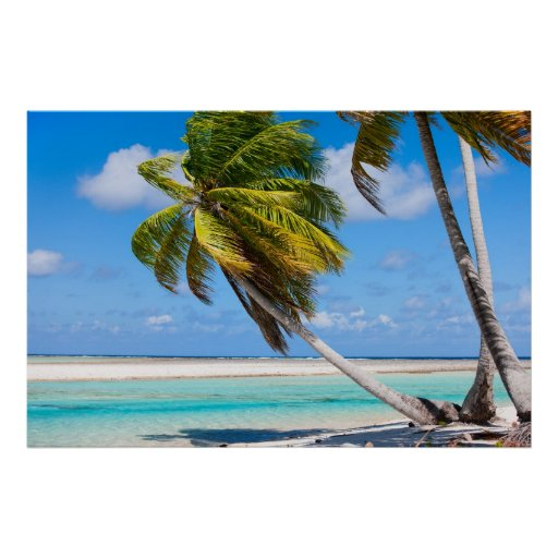 Palm tree on the ocean beach poster