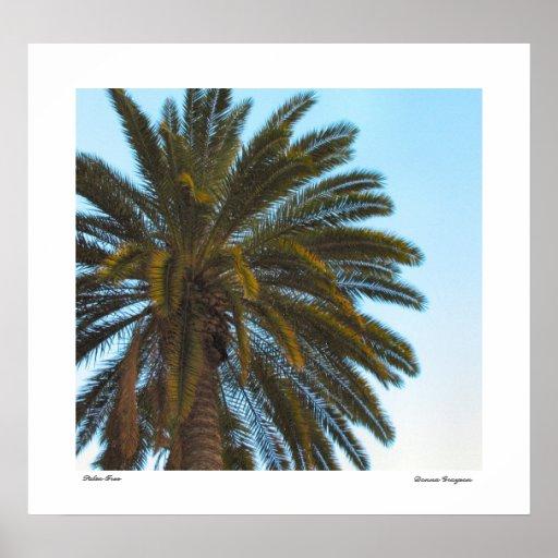 Palm Tree Poster Print