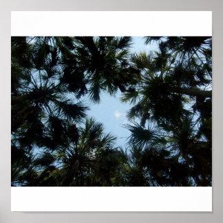Palm Tree Sky Poster