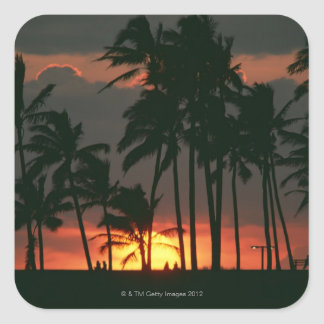 Palm Tree Square Sticker