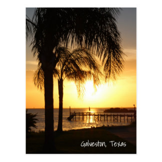 Palm Tree Sunset Postcard