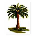 Palm Tree The MUSEUM Zazzle Gifts Postcard