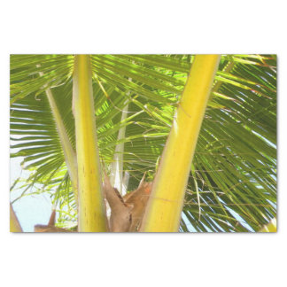 Palm Tree Tropical Design Tissue Paper