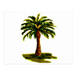 Palm Tree Yellow The MUSEUM Zazzle Gifts Postcard