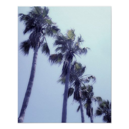 Palm Trees all in a Row Art Photo Print