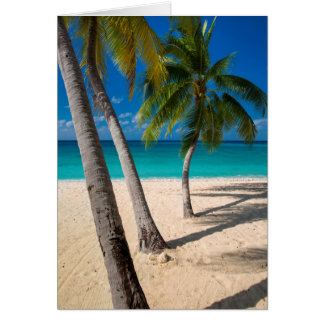 Palm trees and turquoise water along Seven-Mile Card
