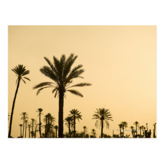 Palm trees at dusk, Morocco Postcard