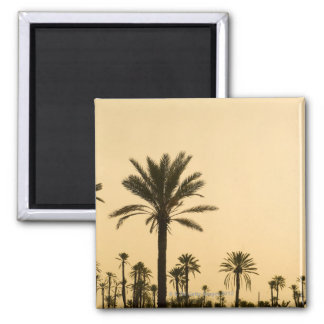 Palm trees at dusk, Morocco Square Magnet