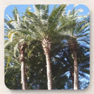 Palm Trees Beverage Coaster