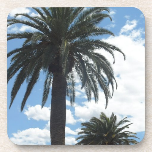palm trees beverage coasters