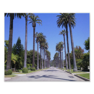 Palm Trees in Los Angeles Poster