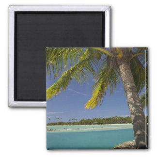 Palm trees & lagoon, Musket Cove Island Resort Square Magnet