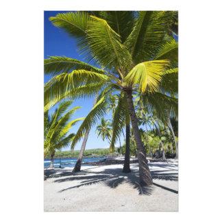 Palm trees National Historic Park Pu uhonua o 2 Photograph