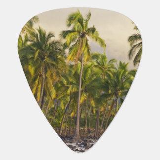 Palm trees, National Historic Park Pu'uhonua o 2 Plectrum