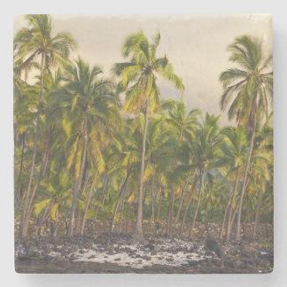 Palm trees, National Historic Park Pu'uhonua o 2 Stone Coaster