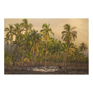 Palm trees, National Historic Park Pu'uhonua o 2 Wood Print