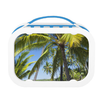 Palm trees, National Historic Park Pu'uhonua o Lunch Box
