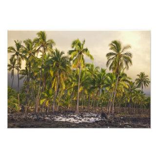 Palm trees, National Historic Park Pu'uhonua o Photo Print