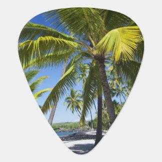 Palm trees, National Historic Park Pu'uhonua o Plectrum