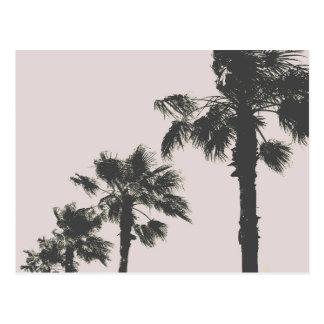 Palm Trees of Wakayama Postcard
