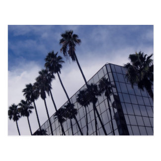Palm Trees & Office Building Postcard