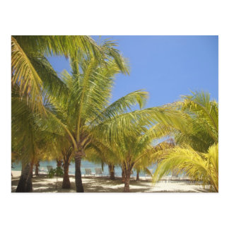 Palm Trees on a Honduras White Sand Beach Postcard