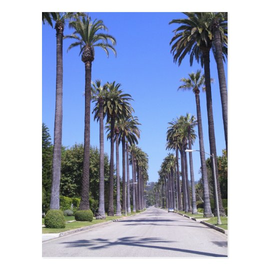 Palm trees on a street in Los Angeles