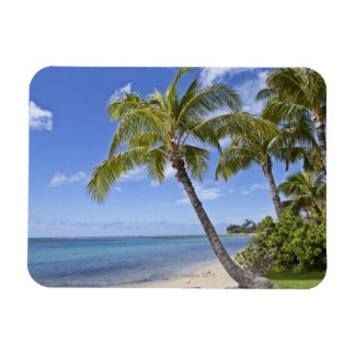 Palm trees on the beach in Hawaii. Magnet