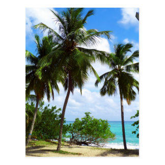 Palm Trees on Tropical Seascape Postcard