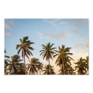 palm trees photo print