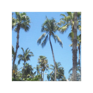 Palm Trees Stretched Canvas Prints